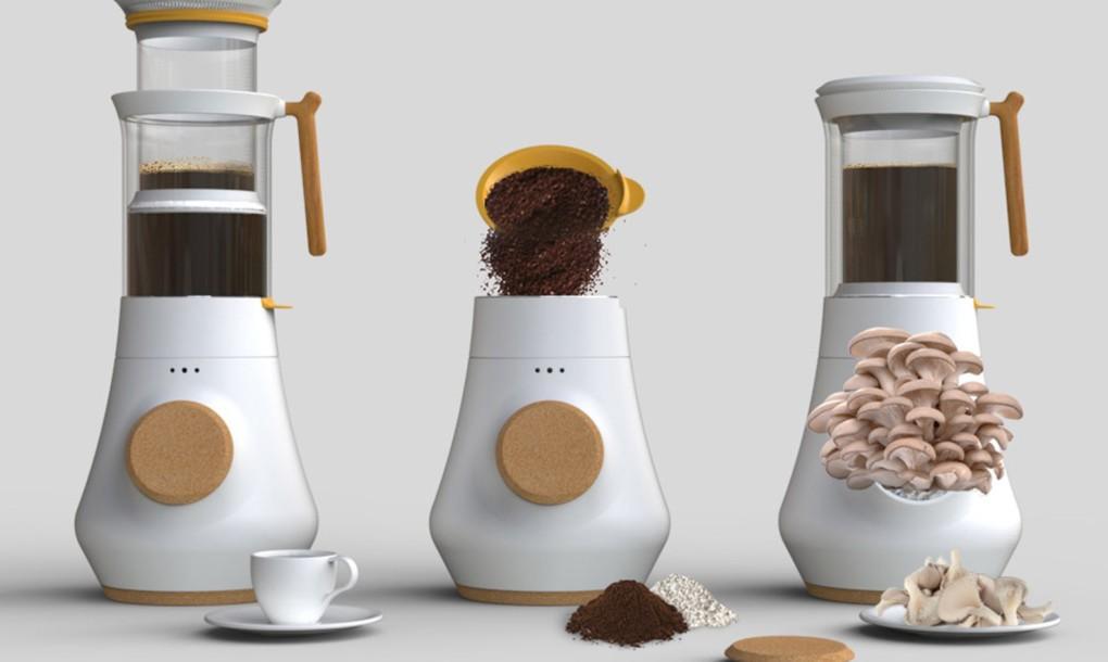 café, cogumelos, cultivo